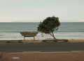 Peopleless sea shore in the evening tree and wooden seat centered Stock Photos