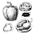 Pepper hand drawn vector set. Vegetable engraved style object, f