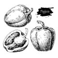 Pepper hand drawn vector set. Vegetable engraved style object
