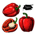 Pepper hand drawn vector set. Vegetable engraved style object, full and half. Isolated bell pepper.