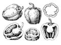 Pepper hand drawn vector set. Vegetable engraved style object, full, half and slices.