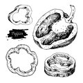 Pepper hand drawn vector set. Vegetable engraved style object, h