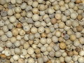 Peppercorns aka piper albi linn Royalty Free Stock Photos