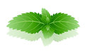 Peppermint branch of mint on a white background Stock Photography