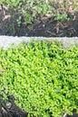 Pequeñas plantas verdes Imagenes de archivo