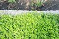 Pequeñas plantas verdes Imágenes de archivo libres de regalías