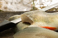 Perch fillets and a fish filleting knife with Royalty Free Stock Photo