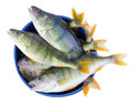 Perch fishes in a bowl fresh on isolated on white background Stock Photography