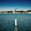 Perched seagull on a maritime marker buoy with an urban backdrop Stock Photos