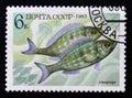 Perciformes (Percomorphi, Acanthopteri) from food fish series, Scott catalog 5165 A2470 6k blue yellow brown, circa 1983 Royalty Free Stock Photo