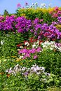 Perennial border colorful with phlox Royalty Free Stock Images