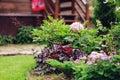 Perennials combination in summer garden with heucheras and hostas