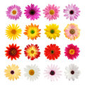 The perfect daisy collection Royalty Free Stock Image