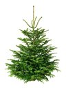 Perfect fir tree on pure white Royalty Free Stock Photo
