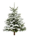 Perfect little christmas tree in snow fresh isolated on pure white background Royalty Free Stock Photography