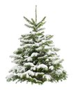 Perfect little christmas tree in snow fresh isolated on pure white background Stock Image