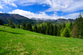 Perfect meadow in mountains. Royalty Free Stock Photo