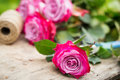 Perfect pink rose flower on wood outdoors Royalty Free Stock Photo