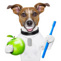 Perfect smile dog with big white teeth with an apple and a toothbrush Royalty Free Stock Photography