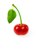 Perfect sweet cherries with the leaf isolated on a white background Royalty Free Stock Photo