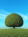 A perfect tree Royalty Free Stock Photo