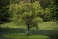 Perfect Tree Swing on Tree Island Royalty Free Stock Photo