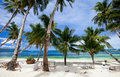 Perfect tropical beach with palm trees Royalty Free Stock Photo