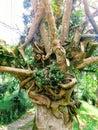 Perfect union tree Royalty Free Stock Photo