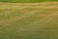 Perfect wavy ground with green grass on a golf field nice Royalty Free Stock Images