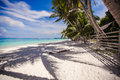 Perfect white beach with green palms and turquoise Royalty Free Stock Image