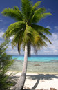 Perfecte palmschaduw Stock Foto's
