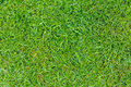 Perfectly cut grass greenery background