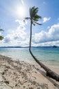 Perfekta palm beach Royaltyfri Fotografi