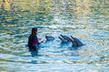 Performing dolphins at Sea World on the Gold Coast. Royalty Free Stock Photo