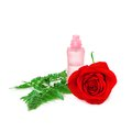 Perfume bottle with fresh red rose and fern leaves Royalty Free Stock Photo