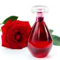 Perfume bottle and a red rose on white background Royalty Free Stock Image