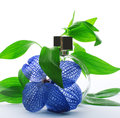 Perfume with delicate flower and green leaves Royalty Free Stock Photo