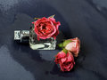 Perfume and delicate pink roses Royalty Free Stock Photo