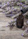 Perfumed herbal oil essence and dreied lavender flowers on wooden background Royalty Free Stock Image