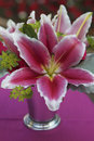 Perfumed lily exploding pink in a silver vase atop a fuchsia table cloth Royalty Free Stock Image