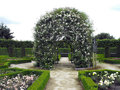 Pergola with white roses in a formal garden Royalty Free Stock Images