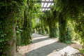 Pergola wroclaw poland in Stock Photo