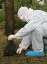 Perigo 1 da gripe de pássaro Imagens de Stock Royalty Free