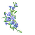 Periwinkle. Branch of first spring flowers - Vínca mínor. Royalty Free Stock Photo
