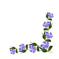 Periwinkle flowers line in a corner Royalty Free Stock Photo