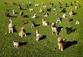 Perros en el parque Imágenes de archivo libres de regalías