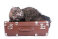 Persian cat lying on vintage suitcase over white background Stock Images