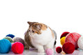 Persian exotic cat isolated with balls of different colours ball yearn pet eith big eyes image for postcard design close up Stock Photo