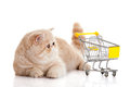 Persian exotic cat isolated with shopping trolly business concept Royalty Free Stock Photo