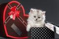 Persian pussy cat